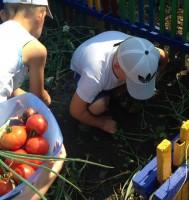 День огородника